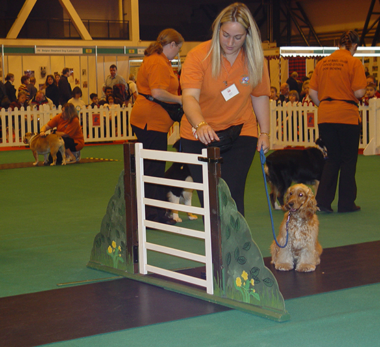 Kennel Club Good Citizen Scheme Bronze training classes